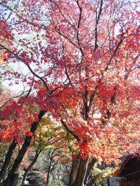 Nichiyouyoshimi1